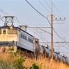 早朝の武蔵野貨物の撮影
