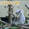 【レポ#8】可愛いコアラは必見!多摩動物公園現地レポート(2020/09/21)【動物園】