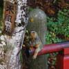 今年も撮りました「木組の猿」