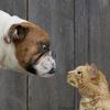 VGG16のFine-tuningによる犬猫認識 (1)