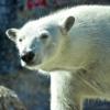 【日本一コスパのいい動物園】四国・徳島のオススメ観光スポット【とくしま動物園】
