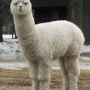 alpaca2unix blog