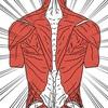 腰痛の原因となる「筋・筋膜性腰痛」について整形外科医が解説してみました