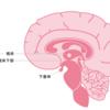 【解剖・生理学】視床下部・下垂体から出るホルモン分泌の特徴。ニュースになった下垂体腺腫とは。