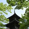 真如堂の新緑、宗忠神社のつつじ