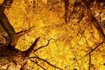 幻想的な黄色い絶景!東京都内で紅葉を楽しめる「いちょう並木」のスポット7選