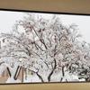 北海道試されすぎ。50年ぶりの大雪です。あと自分にクリスマスプレゼント。