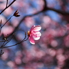 2017年4月23日 物語山(日帰り)