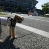 CDSお散歩トレーニング@横浜