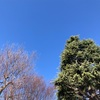 春の訪れお散歩プレイリスト【先週聴いたおすすめ音楽プレイリスト】