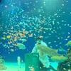 マリホ水族館に行ってきた!