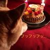 【シニア犬だけど】ウチの柴犬が13歳になりました【元気】