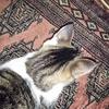 謎の穴をじっと見つめる猫