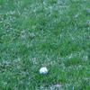 『全英12位好発進も 松山英樹に「スロープレー罰」という敵』を読んで  ゴルフの雑談