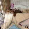 我が家の猫さんを紹介します!~画像がうまくみえなかったので再掲~(猫画像いっぱい)