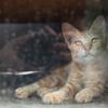 人のしあわせ、猫のしあわせ(29)