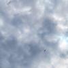 台風一過後の夏空風景(雲下のジェット旅客機&夕焼けのカラス)