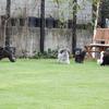 宇野樹君Twitterより 撮影時の自由過ぎるきゃわいいわんこたちのお写真が!