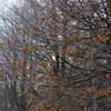【一日一枚写真】秋と冬の間②【一眼レフ】