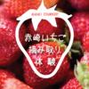 【石川県・能登観光】赤崎いちご狩り。ハウスを独り占めで食べまくり!
