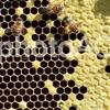 ミツバチの巣穴が六角形なのはなぜ?女王バチがいないと丸い巣穴になる!