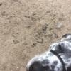 【老犬と暮らす】お散歩はマイペース