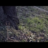 SIGMA fp x MOVIE x 1st Test 【動画作例】