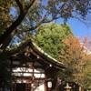 近況〜今月の「三輪神社」(名古屋市中区)