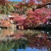 【醍醐寺🍁京都紅葉2020】世界遺産の醍醐寺⛩弁天堂の紅葉は必見‼️