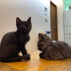 我が家に保護猫の子猫が2匹やってきた!