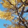今日は立冬、快晴!気温は日中21度。