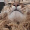 猫アルバム(2021年2月3週目) ~今週もお昼休みのお散歩中心で~