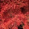 【国内-甲州】秋の富士山周辺で紅葉狩り