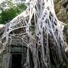 アンコール遺跡見て歩き#18(巨樹と神秘性のタ・プローム続編)