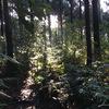 屋久島 癒しの森あるき