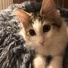 子猫は好奇心・食欲が凄まじい!我が家のお猫様ひま日記2