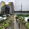 隅田川テラス15キロ:本日は蒸し暑さとの戦い・・・まだまだです