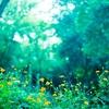 自ら動かずに力を蓄える土の中の若芽 ‐ 水雷屯(すいらいちゅん)易経より