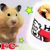【ハムスター 動画】美味すぎてケンタッキーに突っ込んでくるハムスター(笑)