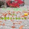 11月、紅葉の京都を甘く見ていた。②