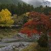 御岳渓谷で紅葉を見て来ました