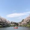 【桜の名所】全国人気ランキング4位の千鳥ヶ淵(千代田区)に行ってきた!