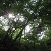 勝俣部長の健康体質作り・・・・高尾山「健康を体感する」(335)