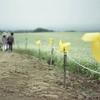 済州島(チェジュ島)イベント情報*そばの花お祭り