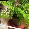 植物たちの冬支度