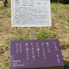 万葉歌碑を訪ねて(その1166)―奈良市春日野町 春日大社神苑萬葉植物園(126)―万葉集 巻七 一三六二