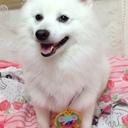 shirokun0806のブログ