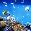 デコパネを使えば簡単!加工し易く保温効果も有る熱帯魚水槽のバックスクリーンづくり!