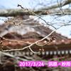 潮温泉大和荘の桜が咲き始めています