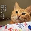 【京都市・木屋町・焼肉店/京黒桜】風邪にご注意下さい!!
